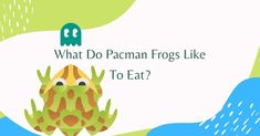 The Wild Diet, Pacman Frog, Dead Mouse, Small Insects, Live Animals, Pac Man, Vertebrates, Small Birds, Frogs
