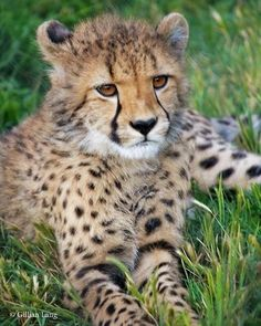 824 Best Our Animals! images in 2017   Wildlife park