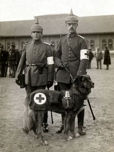 LEONBERGER RED CROSS WAR DOG AND MEDICAL TEAM OLD PHOTO ON GREETINGS NOTE CARD
