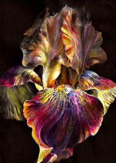 "Floral Canvas Painting 63% off. 20"" x 30"". Beautiful |  @NordstromRack | #NordstromRack"