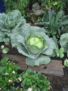 June gardening tips | Sustainable Gardening Australia