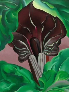 Modern Nature Revealed. Georgia O'Keeffe, Jack-in-the-Pulpit No. 2, 1930