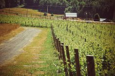 How to Start a Vineyard: 10 steps - wikiHow