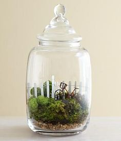 A Ride in the Country Moss Terrarium