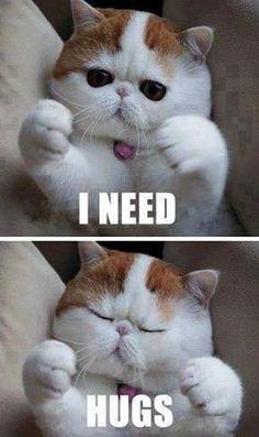 Grumpy Cat | Funny Pet Pictures: Anti Grumpy Cat