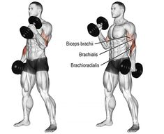 The 11 Best Bicep and Tricep Exercises for Mass - GymGuider.com