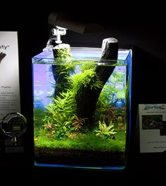 "Aquarium von Oliver Knott aus Sinsheim Price Nano Competition ""Art of Planted Aquarium"" Hannover Aquascaping, Aquarium Aquascape, Betta Aquarium, Planted Aquarium, Nature Aquarium, Aquarium Design, Fish Tank Themes, Nano Cube, Underwater Plants"