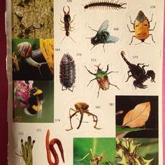 Plaquette de 16 stickers autocollants dans le thème des insectes