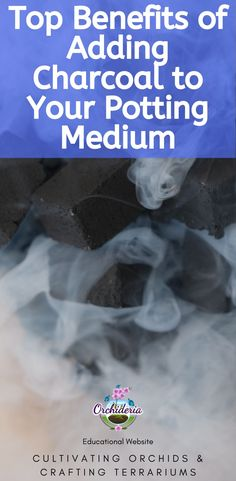 Top Benefits of Adding Charcoal to Your Potting Medium — Orchideria Orchid Terrarium, Terrariums, Indoor Orchids, Build A Greenhouse, House Plant Care, How To Attract Hummingbirds, Orchid Care, Why Do People, Educational Websites