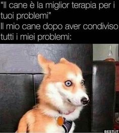 Funny Video Memes, Funny Jokes, Funny Images, Funny Photos, Italian Memes, Funny Scenes, Funny Pins, Funny Facts, Funny Cute