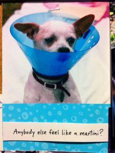 Anybody else feel like a martini? (as seen on the bulletin board at Good Dog Hotel & Spa)