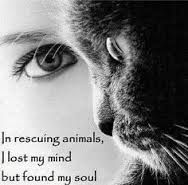 """In Rescuing Animals, I Lost my Mind, But I found my Soul"""""""