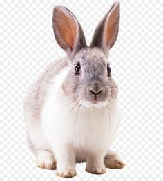Rabbit Png, Green Screen Backgrounds, Png Photo, Gray Background, Nature Pictures, Hare, Easter Bunny, Squirrel, Cartoon