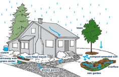 How to manage your stormwater. From Seattle Public Utilities.