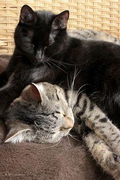 Die Raumfee: Katzen-Stapel
