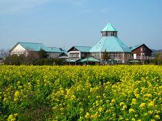 菜の花と枇杷倶楽部 (Rape Blossoms at Roadside Station TOMIURA)