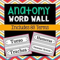 Anatomy Science Vocabulary Word Wall. Each of the 83 astronomy terms has been created in black and white for super easy printing. Terms included: Femur, Fibula, Follicle, Gallbladder, Glands, Humerus, Immune System, Instep, Intestines, Iris, Kidney, Larynx , Ligament, Liver, Lobe, Lumbar Vertebrae, Lymph Node, Mandible, Metatarsal, Molar, Muscle, Navel, Nerves, Nostril