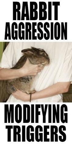 rabbit aggression: modifying the behaviors and moving forward Angora Rabbit, Pet Rabbit, Bonding Rabbits, Rabbit Behavior, Flemish Giant Rabbit, Kitty Drawing, Bunny Hutch, Bunny Cages, Raising Rabbits