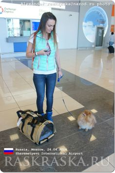 Carrying bag for dogs. Sheremetyevo International Airport, Pomeranian, Dog Photos, Projects For Kids, Small Dogs, Moscow, Photo And Video, Bags, Beauty
