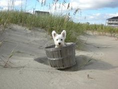 this pup knows where the best pet friendly beaches are!