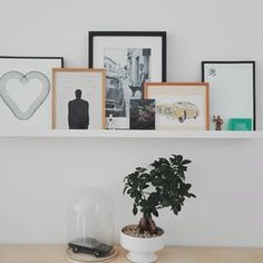 Our new shelf of happiness    #shelfie #art #graphic #photography #plants #bonsai #graphicart