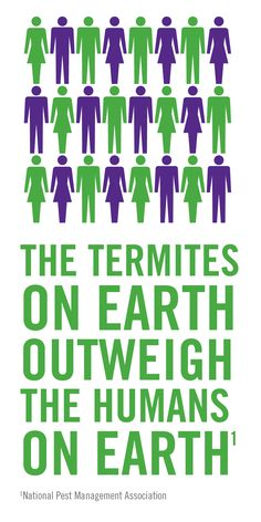 Termites have us outnumbered!
