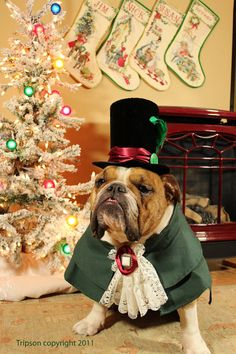 """""""It's the most wonderful time of the year!"""" #dogs #pets #EnglishBulldogs Facebook.com/sodoggonefunny  Christmas Caroler Dog Pet Costume outfit by by MattiOnline on Etsy>"""