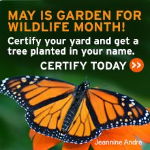 Celebrate Garden for Wildlife Month - Certify your yard today!
