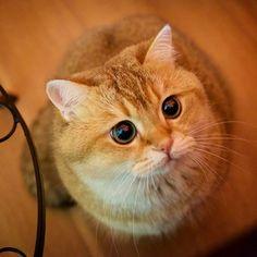 Знакомьтесь, Хосико — настоящий кот в сапогах. — Vinegret