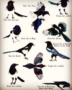 Can't remember where I saw this but I always got as far as six and forgot the rest. The most magpies I have ever seen at one time was seven. #magpies #magpierhyme Magpie Tattoo, Pretty Birds, Dark Souls, Book Of Shadows, Art Plastique, Writing Prompts, Witchcraft, Art Reference, Illustration