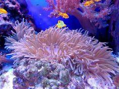 Thérapie quantique : l'aquarium