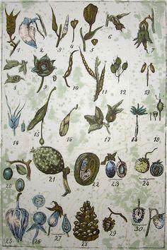 vintage botanical wallpaper for back of bookcases