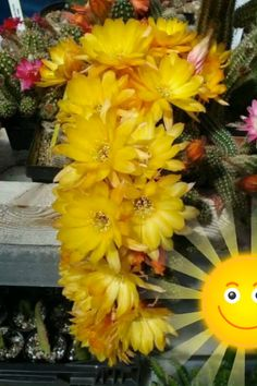 Good Morning Beautiful Gif, Good Morning Gif, Good Morning Flowers, Good Morning Greetings, Good Morning Images, Beautiful Flowers Garden, Amazing Flowers, Beautiful Birds, Wallpaper Flower