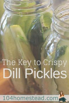 There are a lot of dill pickle recipe ideas online, but there is something they all lack. The secret to crispy pickles. A single surprise ingredient. (Ingredients In A Jar Food Storage) Canning Tips, Home Canning, Canning Recipes, Fermentation Recipes, Crispy Dill Pickle Recipe, Spicy Pickle Recipes, Canning Dill Pickles, Cucumber Canning, Gourmet