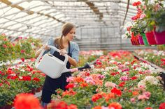 Woman in a black apron working in a greenhouse by prostooleh. Woman in a greenhouse. Girl in a black apron. New Cinema, Black Apron, Kate Spade, Freepik, Infographics, Sunset, Design, Women, Nature