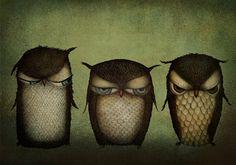 Three grumpy owls  Illustration print 7 x 5 by majalin on Etsy