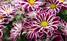Such a beautiful garden flowers