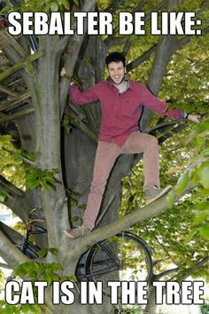 Sebalter be like cat is in the tree! :D