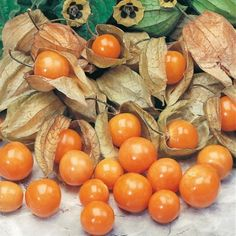 The Cape Gooseberry - Physalis peruviana Cape Gooseberry, Exotic Fruit, Tropical Fruits, Sutton Seeds, Orange Fruit, Fruit Garden, Vegetable Garden, Natural Health Remedies, Vegetable Gardening