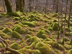 http://upload.wikimedia.org/wikipedia/commons/e/ed/Moss_covered_rocks_-_geograph.org.uk_-_506693.jpg