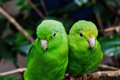 Love Birds by Largeguy1 on Flickr.