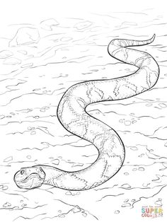 Snake Coloring Pages for Adults  Copperhead snake Colouring Pages