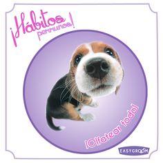 #Hábitosperrunos ¿Cuántos perritos pasan olfateando todo lo que encuentran?