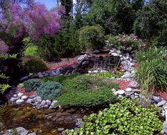 garden pond....