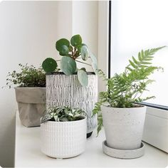 Its-a-Jungle-in-Here---pot-grouping-