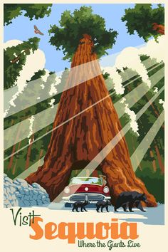 In California's southern Sierra, it's all about the trees pictured in this art deco travel poster--the Giant Sequoia--the largest living thing on earth.