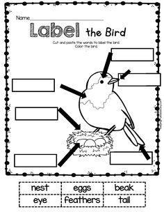 LABELING - kindergarten math and reading worksheets for spring - no prep activities #kindergarten #kindergartenreading