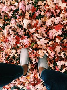 may // fall Autumn Aesthetic, Red Aesthetic, Aesthetic Photo, Cute Photography, Autumn Photography, Fall Backrounds, Autumn Trees, Autumn Leaves, Instagram And Snapchat