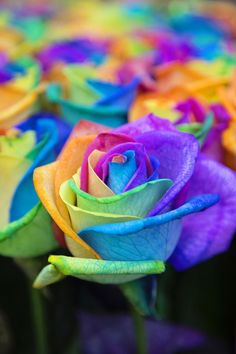 The rainbow rose is a rose that has had its petals artificially coloured. Beautiful Rose Flowers, Colorful Flowers, Rainbow Roses, Girl Life Hacks, Floral Photography, Blue Roses, Flower Market, Floral Style, Hibiscus