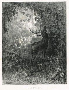 Le cerf et la vigne - fable de Jean de La Fontaine illustrée par Gustave Doré - MAS Estampes Anciennes - MAS Antique Prints